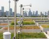 ontario: green roofs