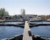 california: monitoring water quality at a recirculating aquaculture facility