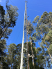 Looking up at the Warra Flux Tower. Several of the AP200 intakes can be seen. The CPEC200 is mounted at the top.