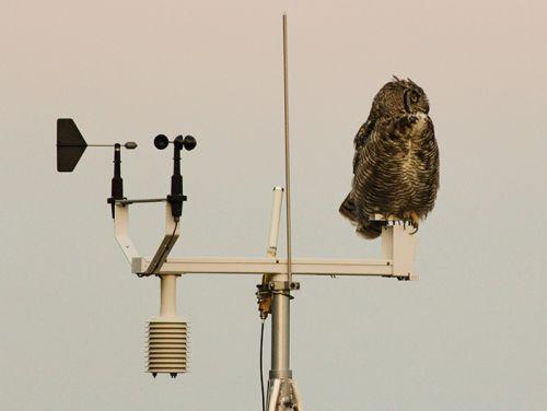 6 Astuces pour protéger vos stations météo des oiseaux