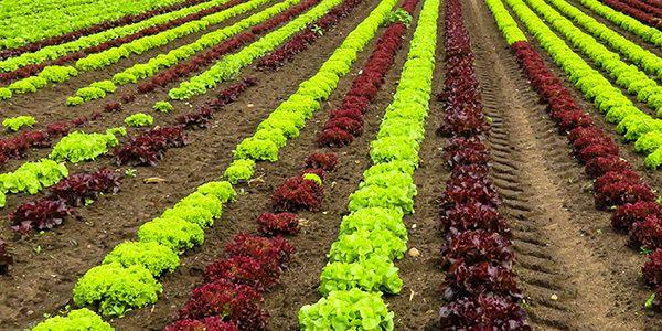 Instrumentation de recherche sur l'agriculture et les sols Instrumentation de qualité recherche pour fournir des données fiables et publiables